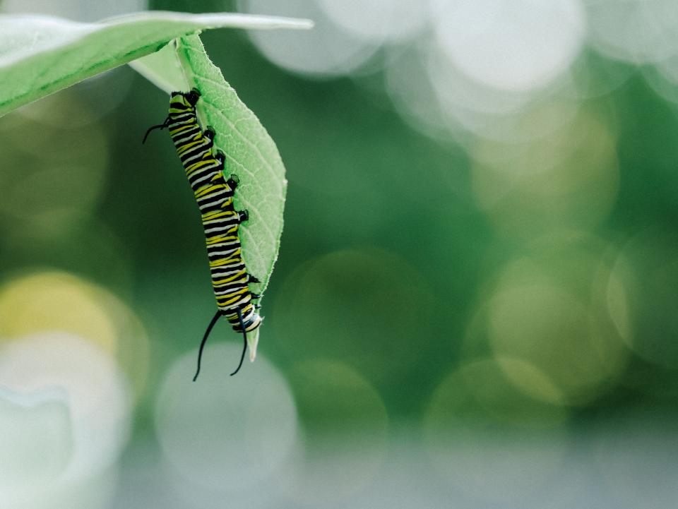 caterpillar, insects, green, leaf, nature