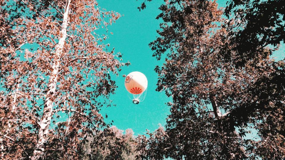 sky, tree, plant, nature, sunny, sunlight, autumn, hot, air, balloon