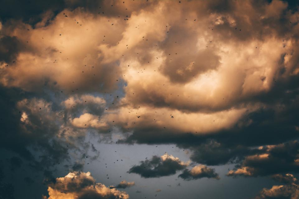 dark, sky, clouds, birds, flying, animal