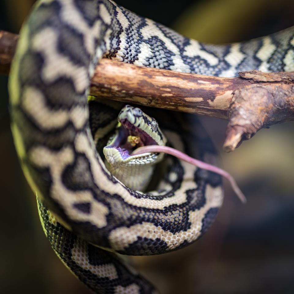 snake, reptile, animal, wood, tree