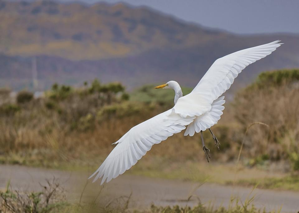 bird, animal, flying, blur, nature, outdoor