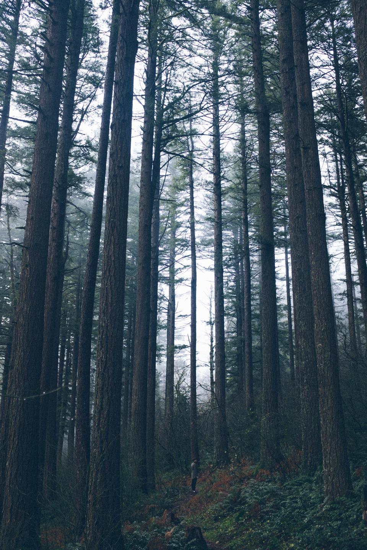 forest, woods, wildlife, dark, camping, vacation, trip, adventure, trek, people, man, green, trees, grass