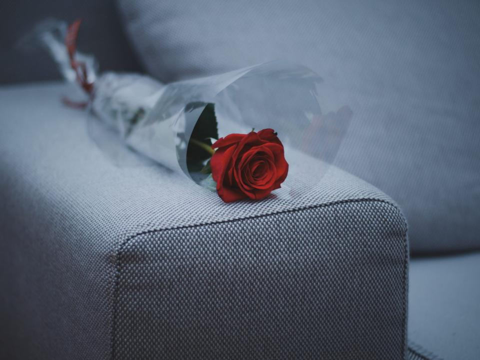 flower, red, petal, bloom, garden, plant, nature, autumn, fall, rose, plastic, couch, sofa