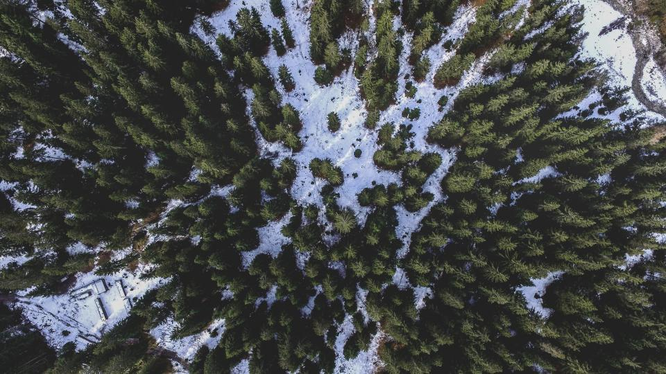 trees plant nature mountain landscape snow winter aerial view