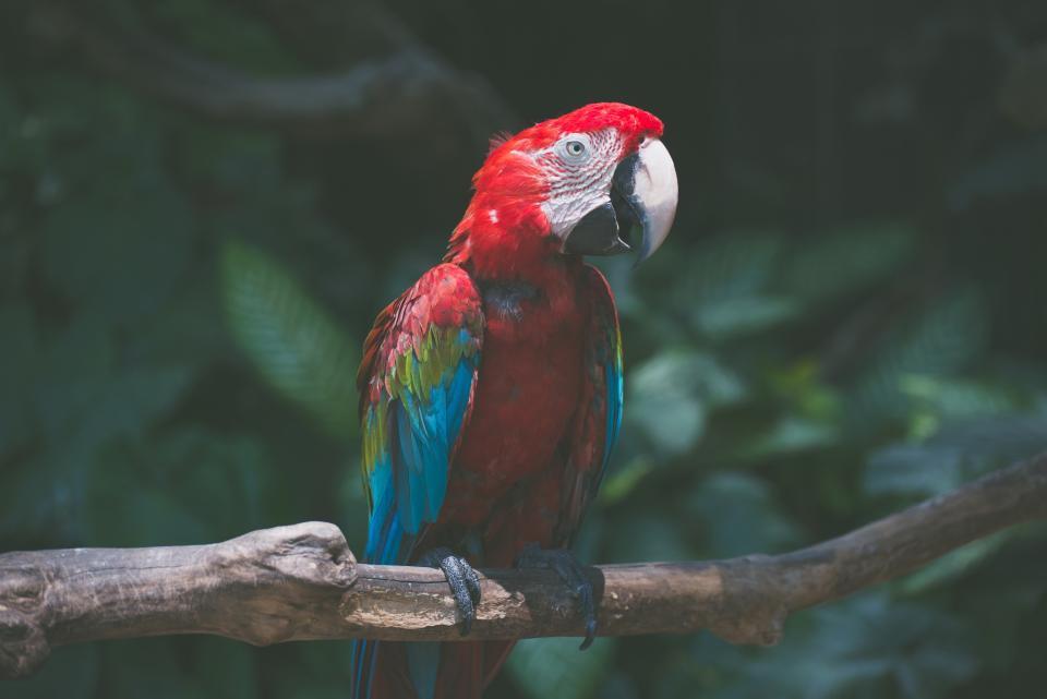 bird, branch, bokeh, animal, tree, parrot, green, nature, beak, red