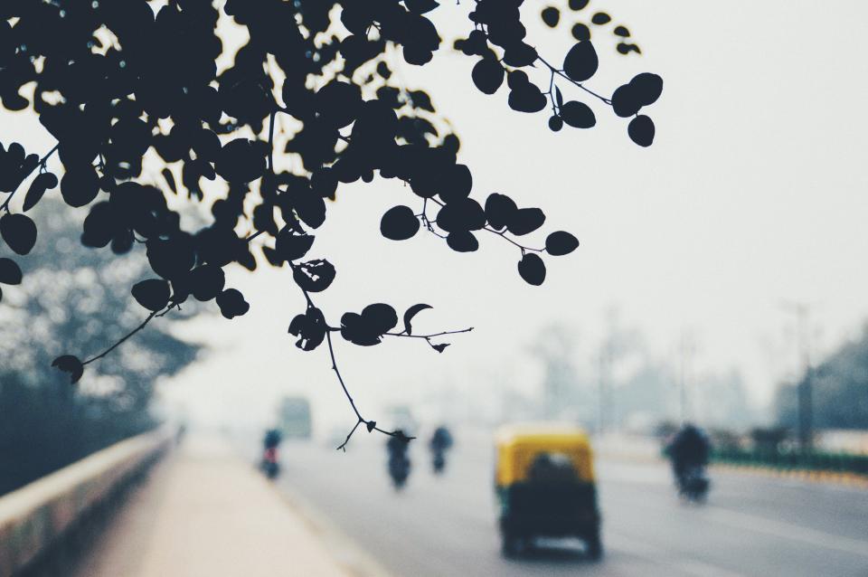 trees, leaves, road, highway, car, motorcycle, transportation, vehicle