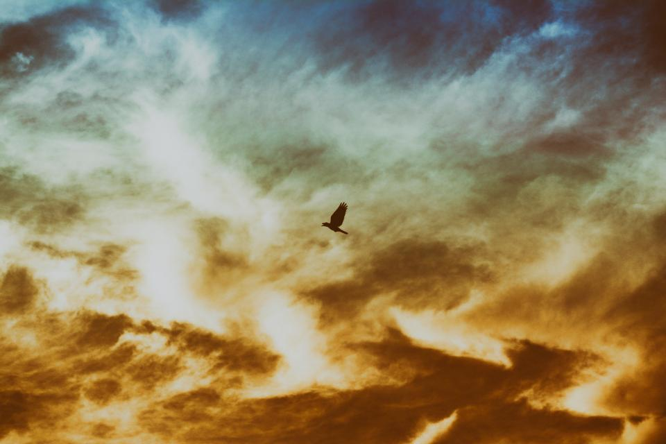 bird, flying, wings, animal, sky, sunset, dusk, clouds, sun, silhouette
