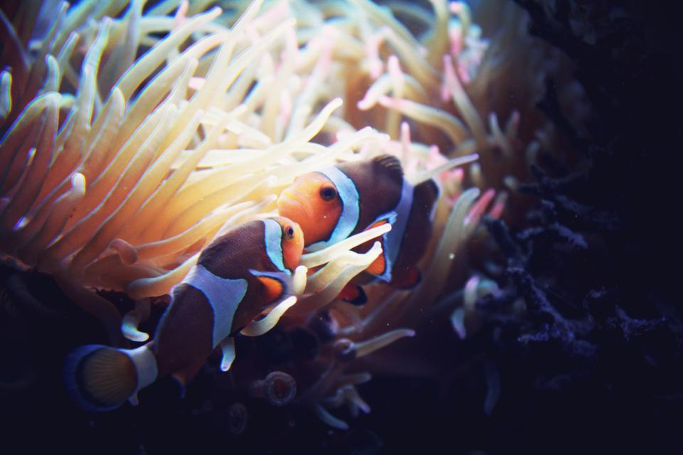 fish, aquatic, animal, ocean, underwater, blue, water, corals