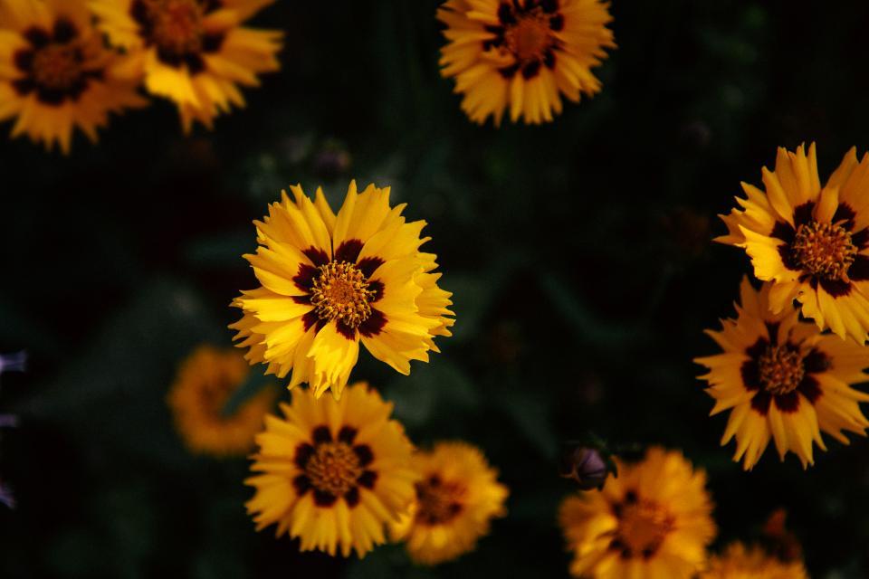 yellow, petal, flower, bloom, nature, plant, blur