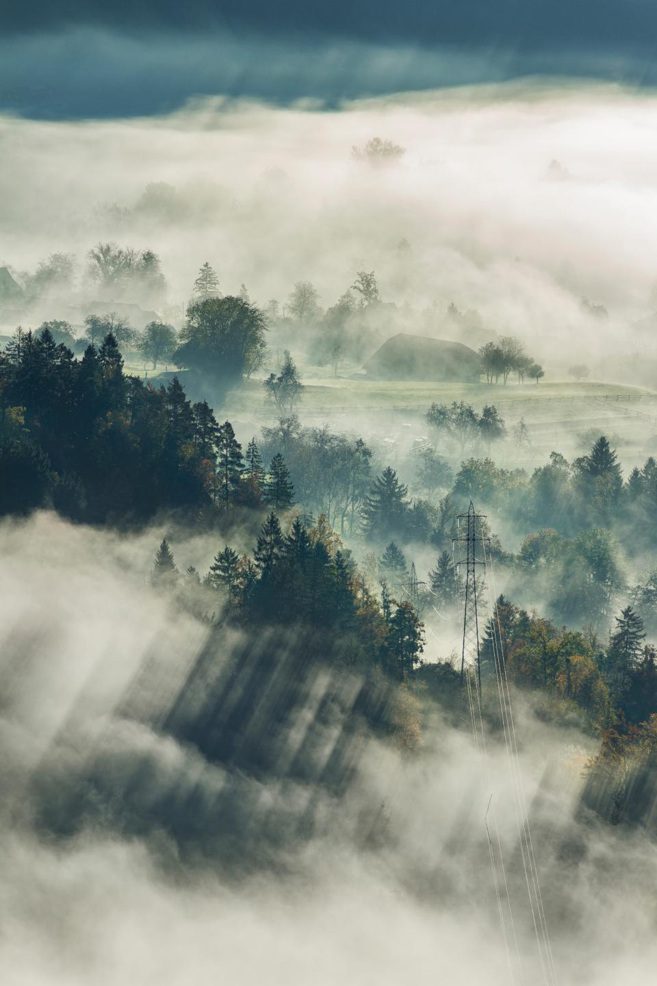 fog, trees, plant, nature, mountain, highland, cloud, landscape