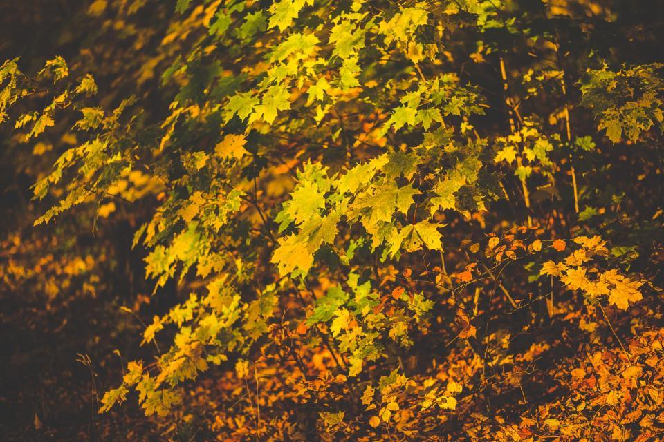 leaves fall autumn nature plants leaf fall