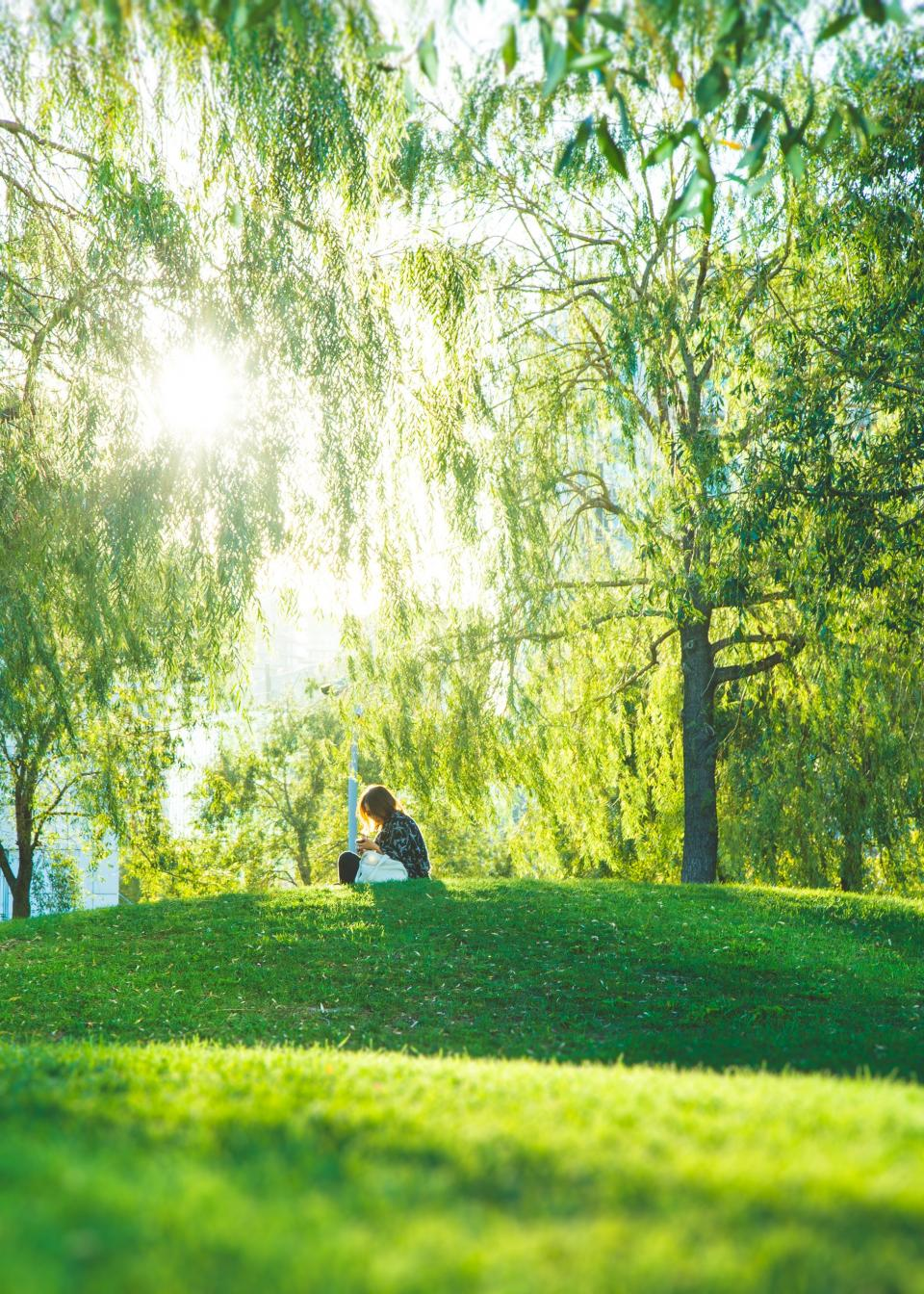 green, grass, nature, highland, lawn, outdoor, people, sitting, alone, picnic, tree, plant, landscape