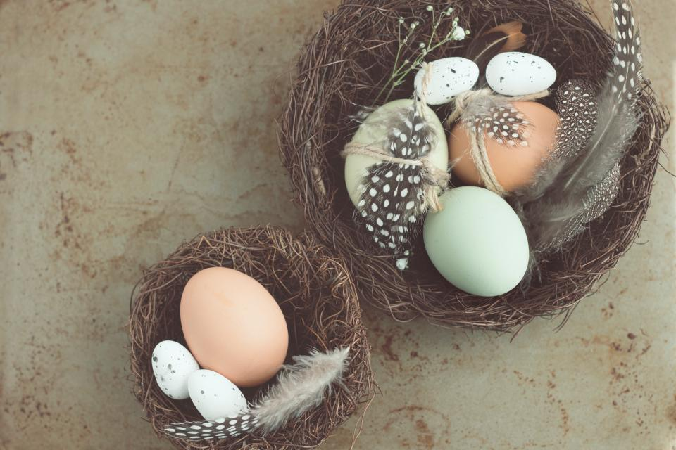egg, nest, bird, baby, feathers, shell