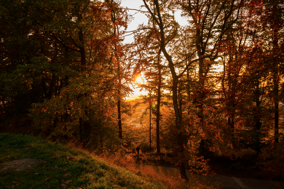 autumn leaves forest trees fall sunset nature
