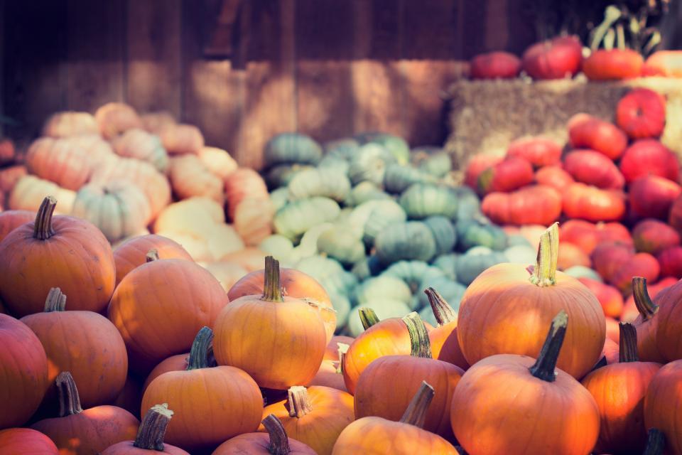 halloween, pumpkins, orange, green, red, colorful, squash, vegetable, harvest
