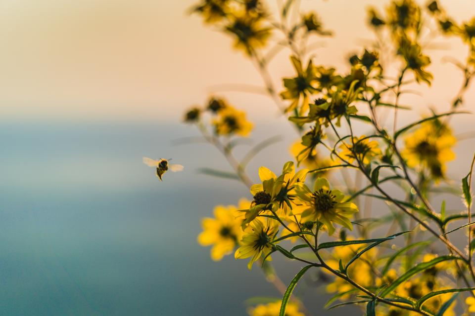 yellow flower plant nature outdoor sky blur