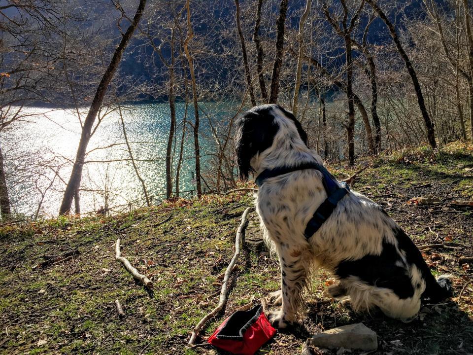 dog, pet, animal, grass, highland, tree, lake, water, sunrise, sunlight