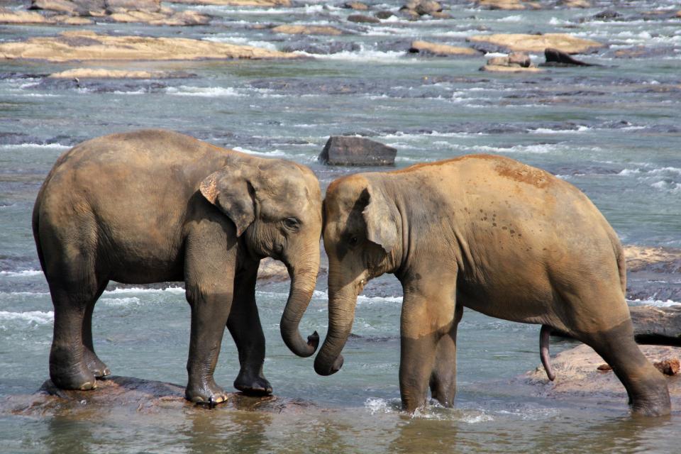 elephant, animal, rocks, water, wave, nature