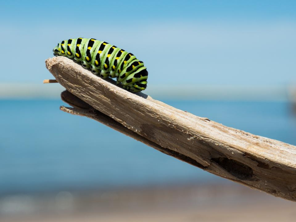 caterpillar, insect, animal, wood, sunny, day, nature, outdoor