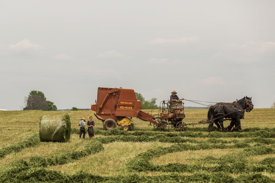green, grass, field, farm, agriculture, crops, people, farmer, farming, horse, animal, men, woman, machine, equipment, sky, tree, plant