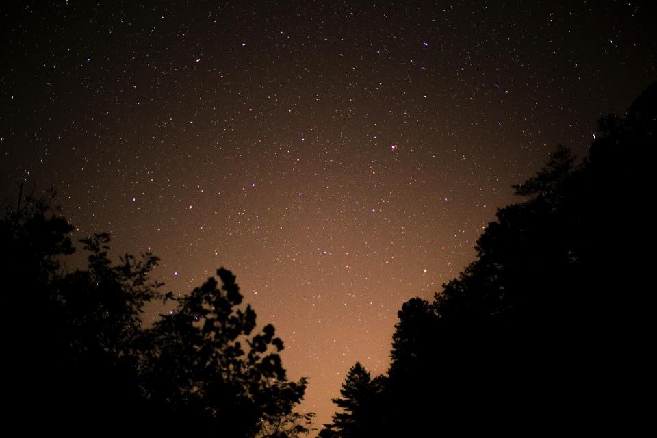 trees plant sky stars night silhouette