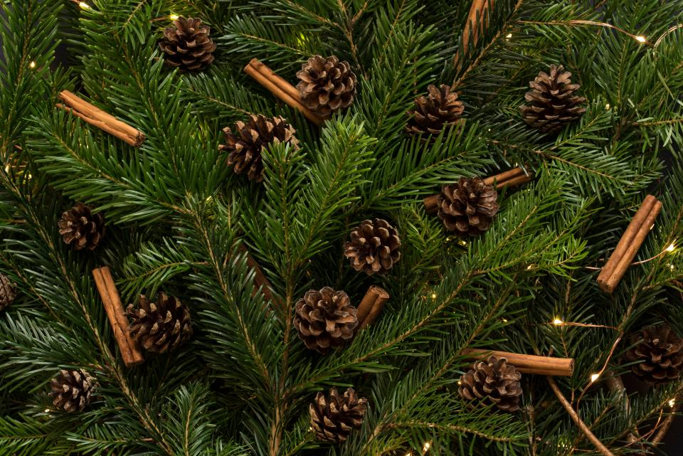 christmas, tree, pine, cone, holiday, season, decor, ornament
