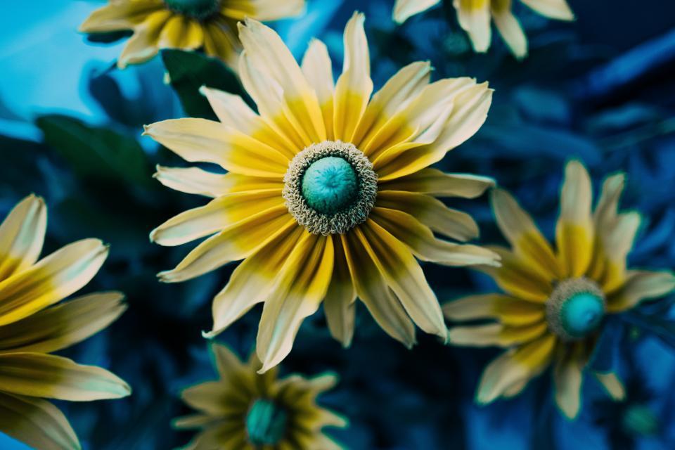 flower, petal, bloom, nature, plant, blue, blur