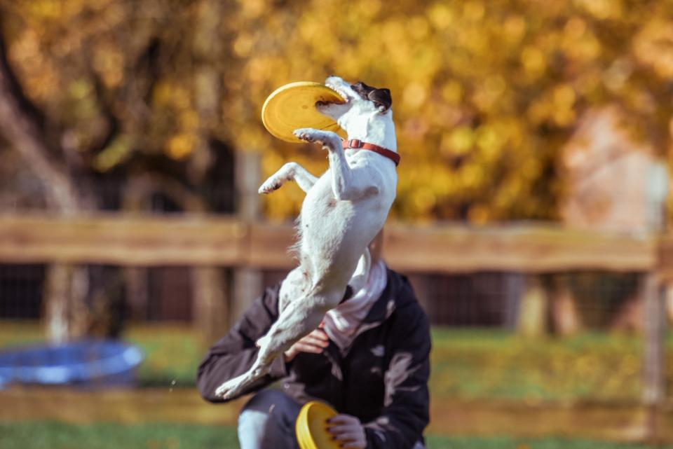 animal, dog, catch, play, plate, plants, grass, people, man, guy, pet, tree, fence, game, field