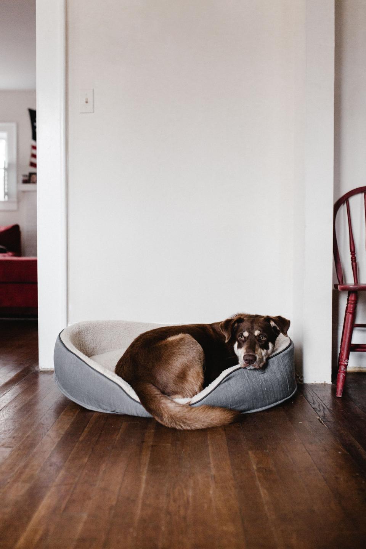 house inside indoor wall wooden floor dog animal pet rest