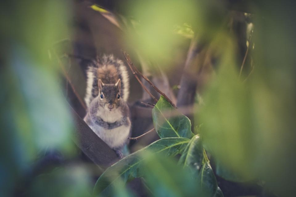 nature leaves green woods forest squirrel animal