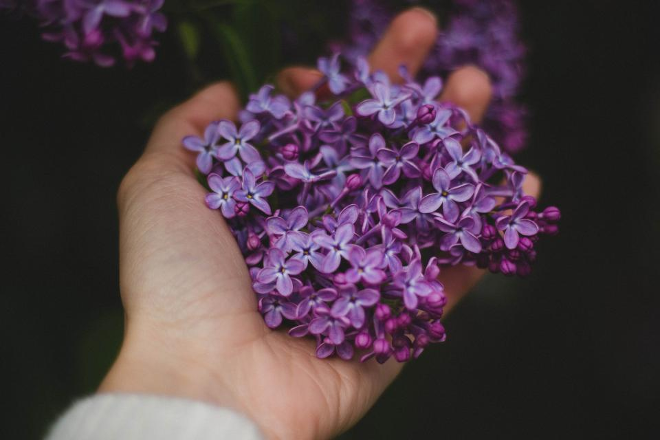 hand, palm, violet, purple, flower, petals, outdoor, dark, blur