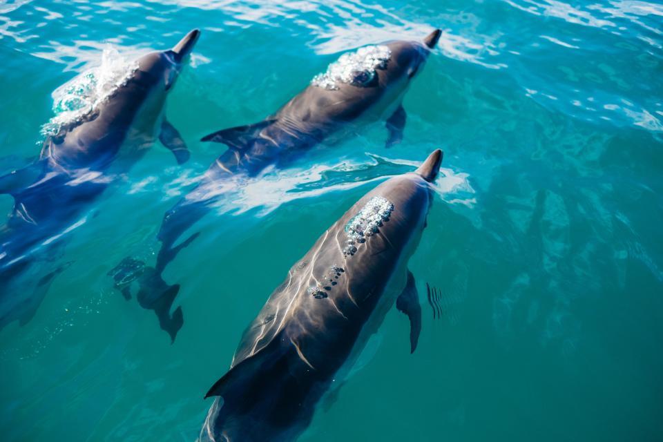 blue, water, underwater, dolphin, animal, fish
