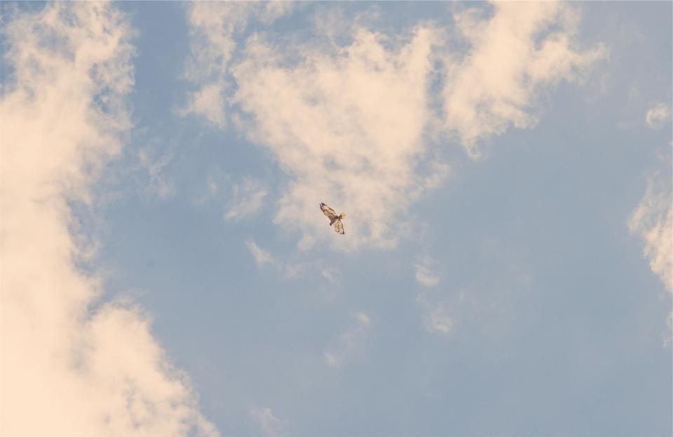 bird, wings, flying, blue, sky