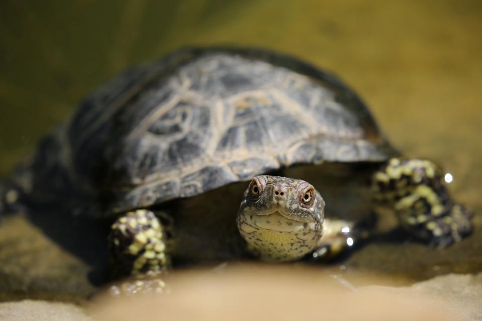 turtle, animal, reptile, zoo, nature, water