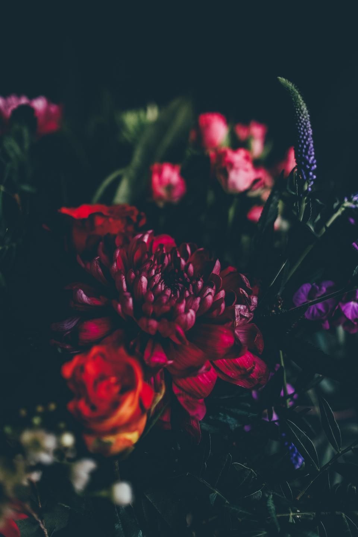 flower, red, petal, bloom, garden, plant, nature, autumn, fall