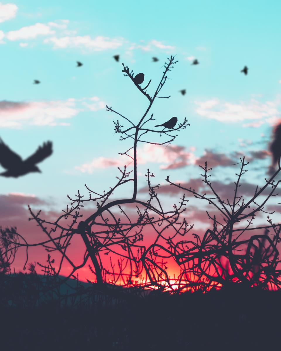 clouds, sky, silhouette, tree, plant, birds, animal, flying
