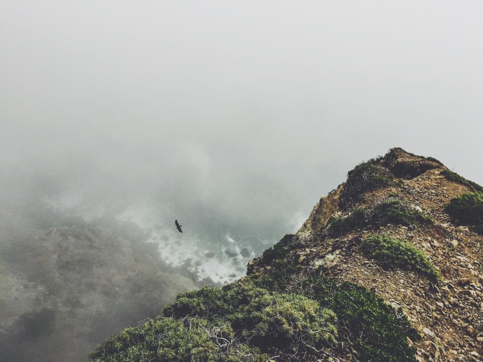 cliff, coast, fog, bird, flying, nature, outdoors, shore, ocean, sea