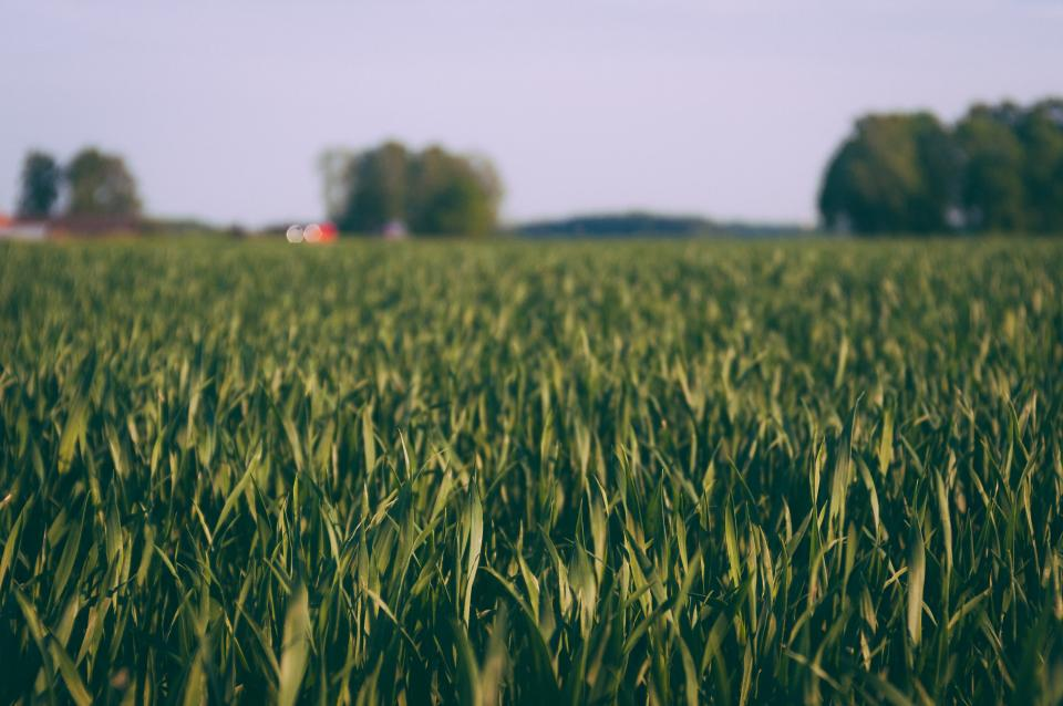 Thumbnail for Sicilia. Al via incentivi a StartUp di giovani agricoltori