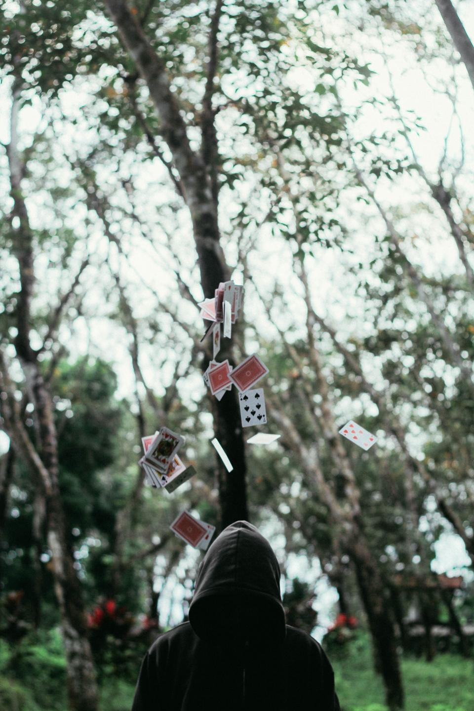 cards, man, hoodie, trees, bokeh, back, guy, forest, magician, blur, nature