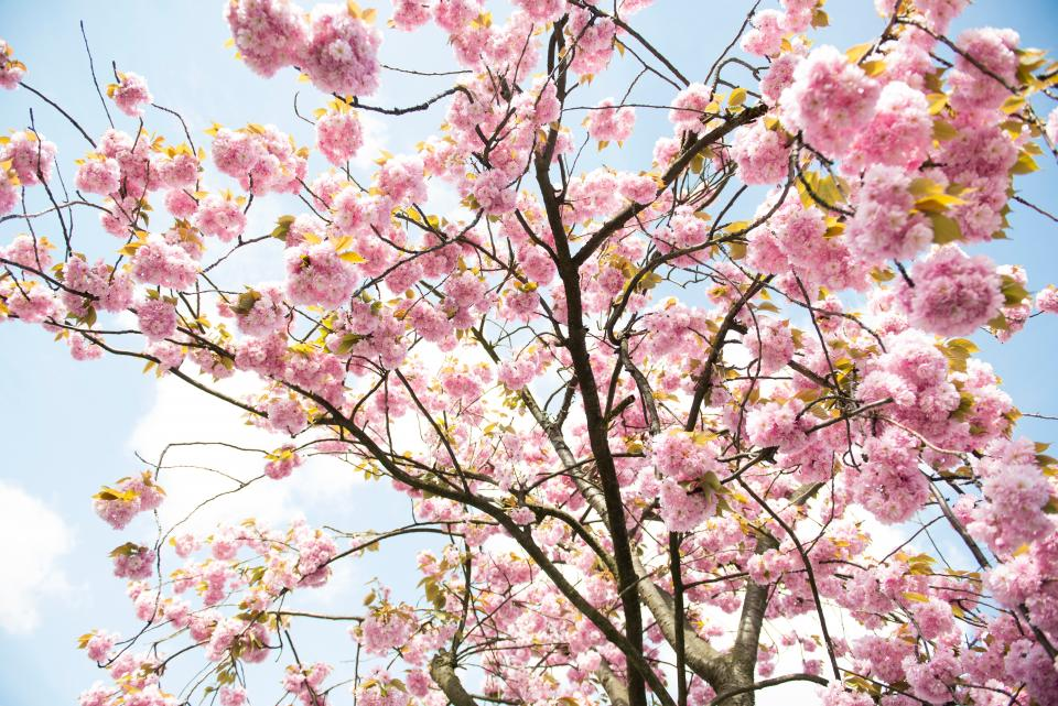 flower blossom petals bloom tree plant sky