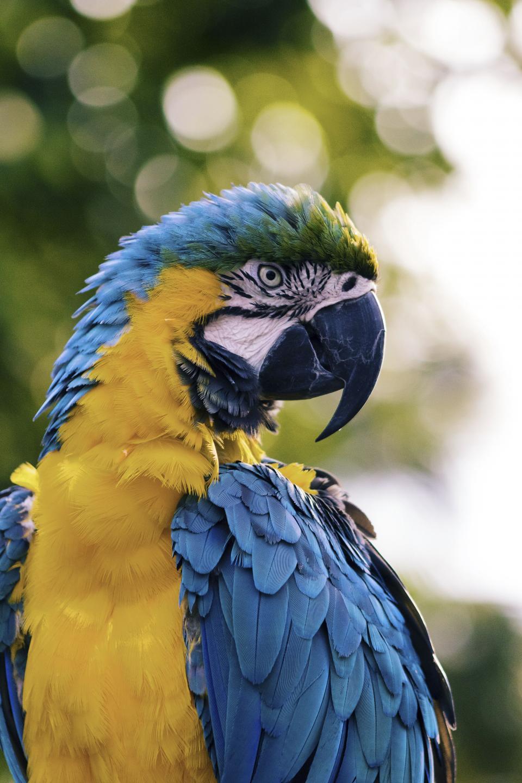 bird, beak, feather, animal, fly, parrot, colorful