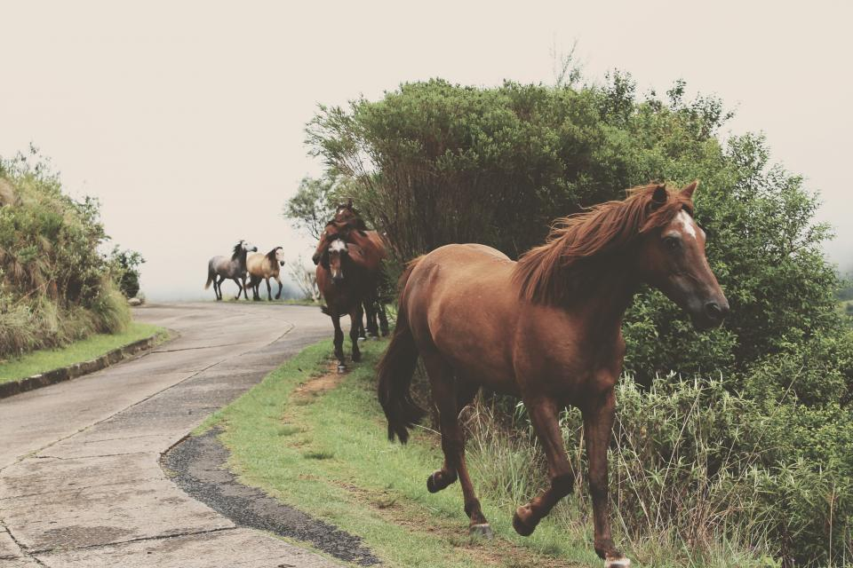 horse, animal, green, grass, trees, plant, outdoor, nature, road, travel